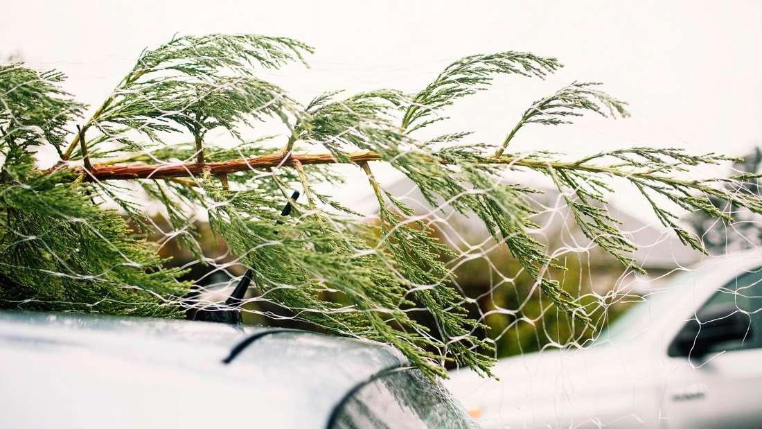 Ein Baum liegt auf dem Dach eines Pkw. (Symbolbild)