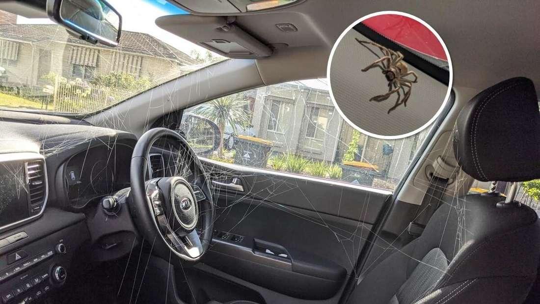Großes Bild: Spinnweben im Innenraum des Kia Sportage SUV. Kleines Bild: Riesenspinne an der A-Säule.