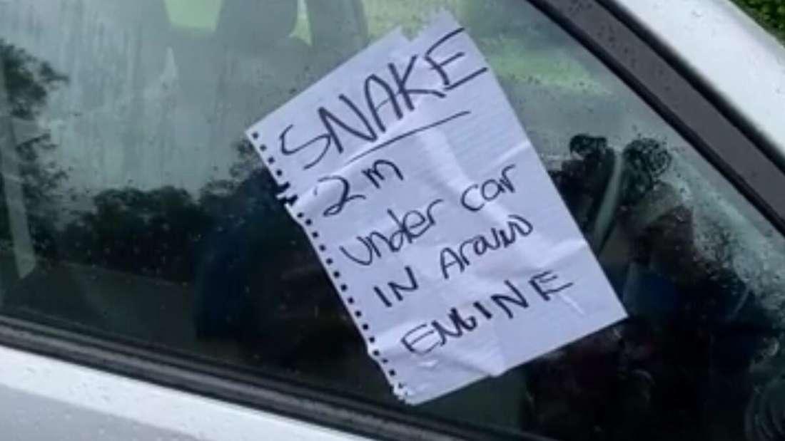 Ein Hinweis auf eine Schlange klebt an einer Autoscheibe.