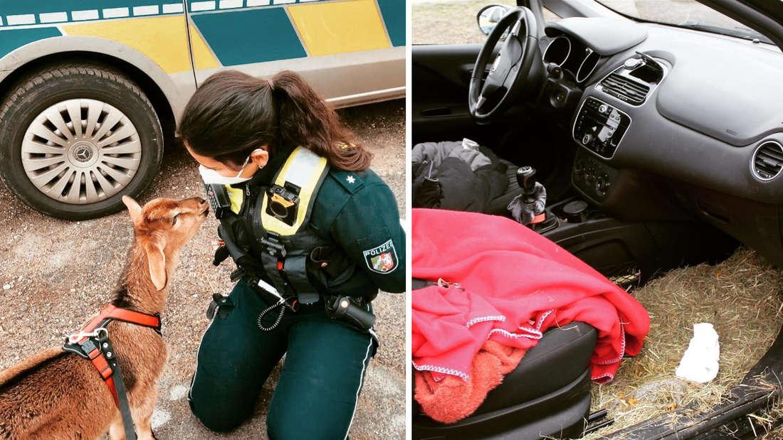 """Links: eine Polizistin mit Ziege """"Hugo"""". Rechts: ein Beifahrersitz mit Decke und Stroh im Fußbereich."""
