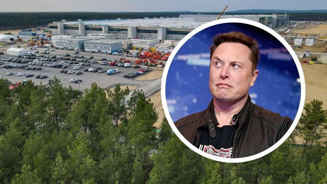Die Baustelle der Tesla Gigafactory Berlin Brandenburg in Grünheide und Elon Musk (Symbolbild)