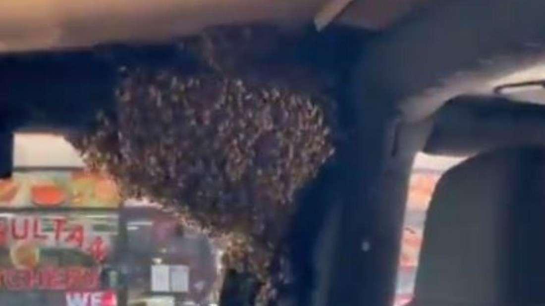 Ein riesiger Bienenschwarm hängt auf der Innenseite einer Autotür.